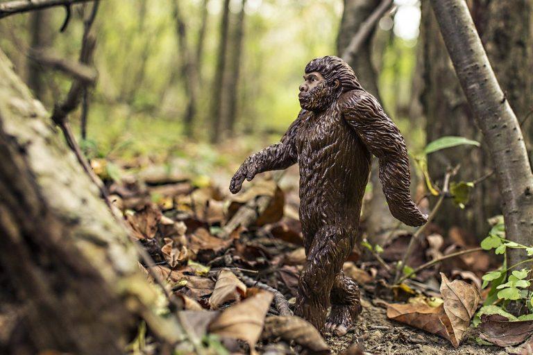 bigfoot, evolution, anthropoid ape